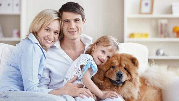 Wills & Trusts dog-young-family Direct Wills England